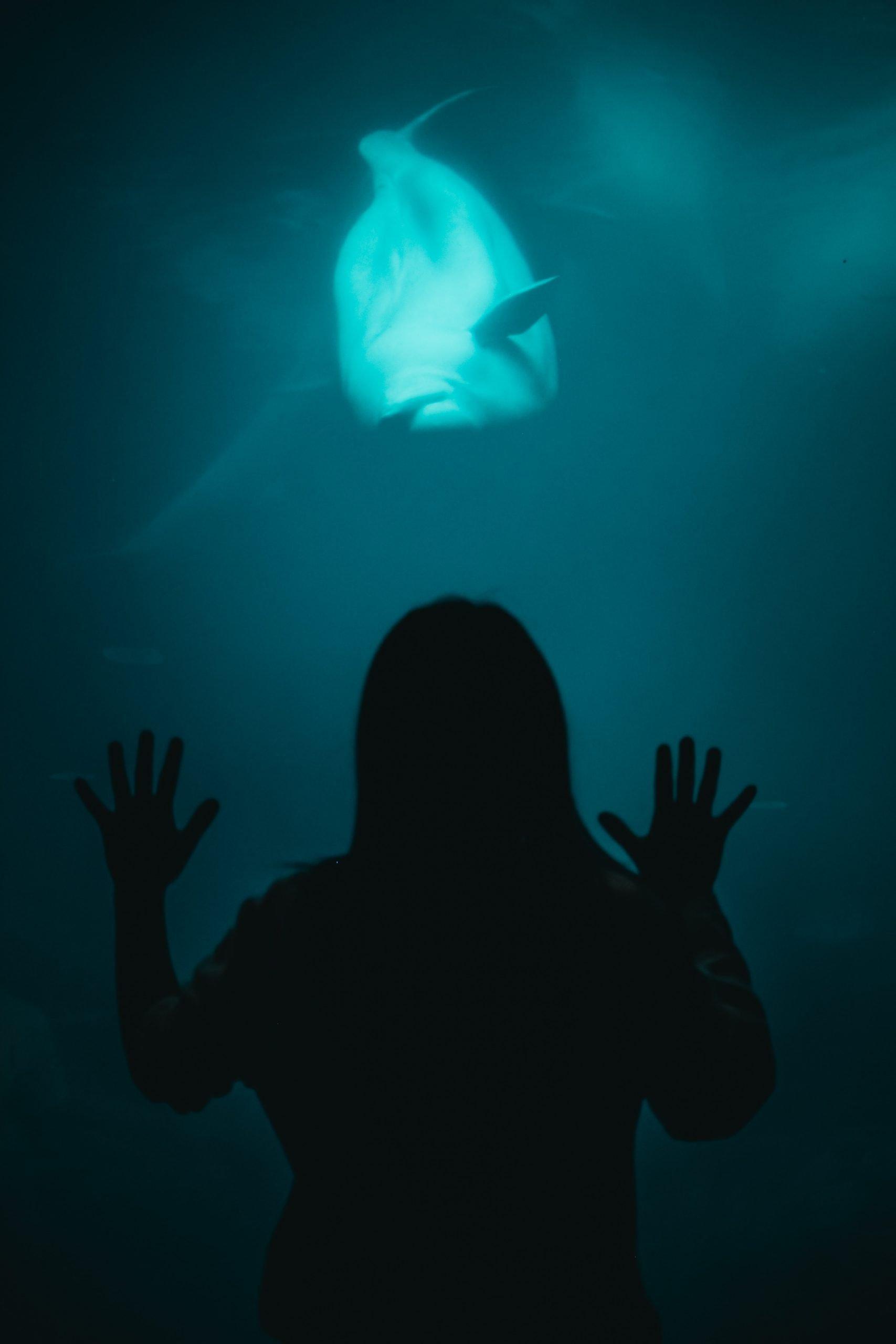 Acquarium.Whale.Silouette